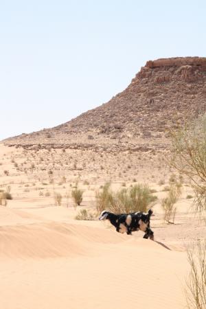 Timbain et les nomades